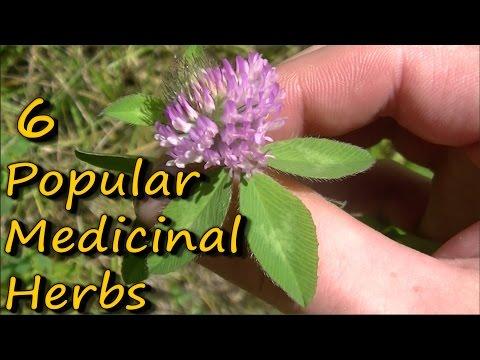Video 6 Popular Medicinal Plants & Herbs