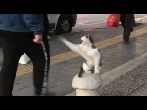 Μια γάτα επιτίθεται στους περαστικούς
