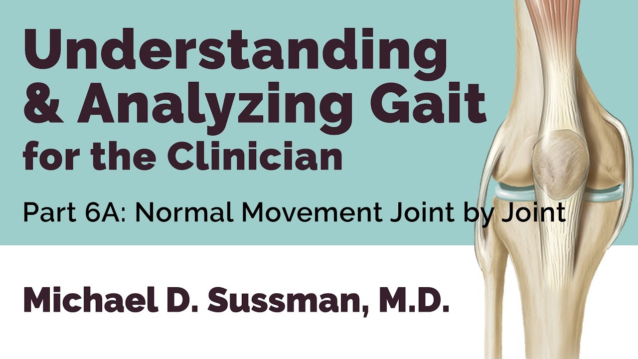 Understanding & Analyzing Gait For The Clinician: Part 06A [Normal Movement Joint By Joint]