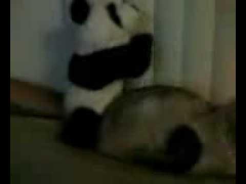 Spooky Jew Gets Panda Pedo Bear raped