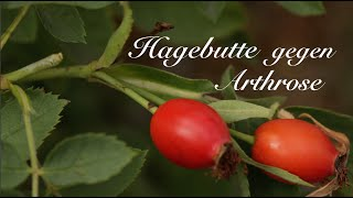 Hagebutte gegen Arthrose - Viriditas Heilpflanzen-Video