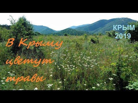 Цветы и бабочки. Крым, июнь, цветение трав в горах