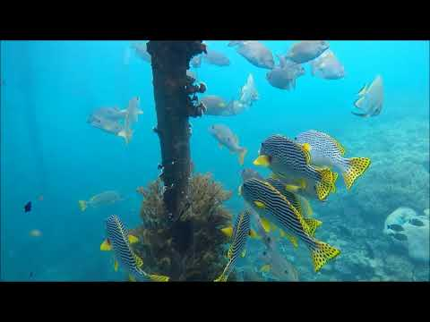 sweetlips-1 (...footage by Ralf Lipphardt)