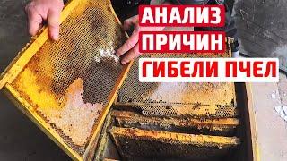 Почему семья опоносилась Зимовка пчел