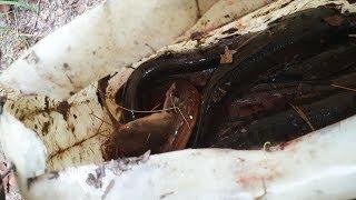 Cha con thăm câu buổi sáng. Cá lươn dính lịa lịa, cá lôi gãy cần luôn | Săn bắt SÓC TRĂNG |