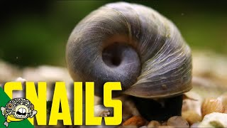Snails! The good, the bad, and the just plain useful!