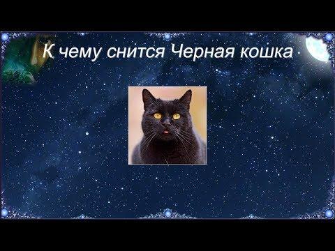 К чему снится Черная кошка (Сонник)
