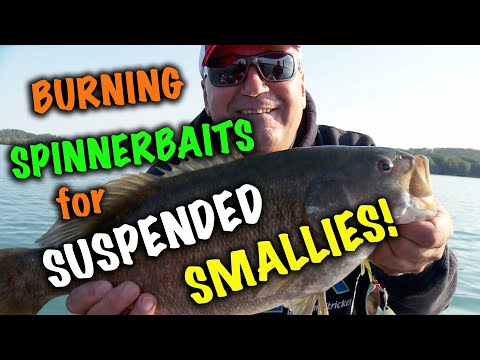 Giant Smallies of Fall