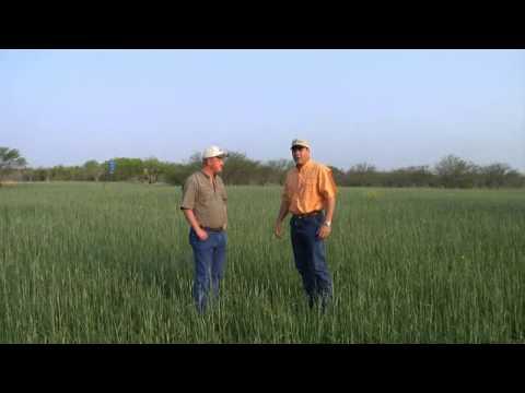 Perennial Food Plots, Part 1