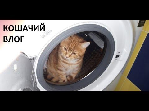 ВЛОГ/тренажер для кота/как лечить кота