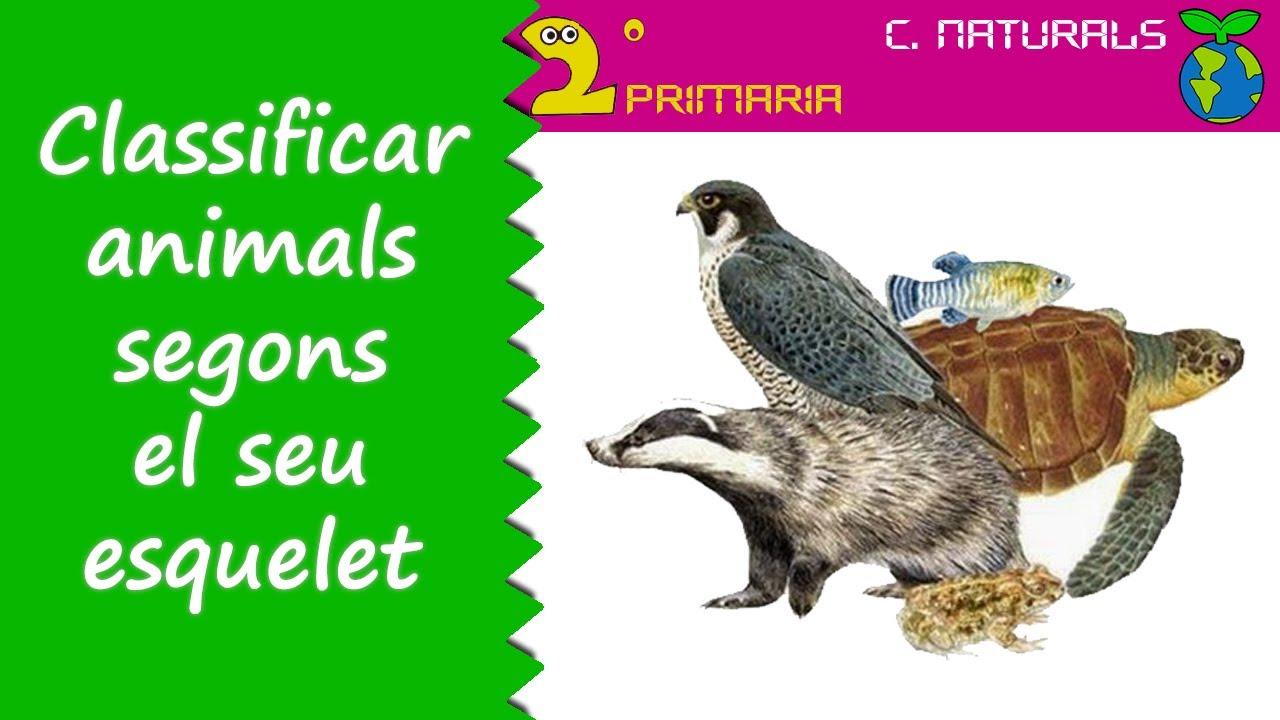 Ciències de la Naturalesa. 2n Primària. Tema 4. Animals segons el seu esquelet
