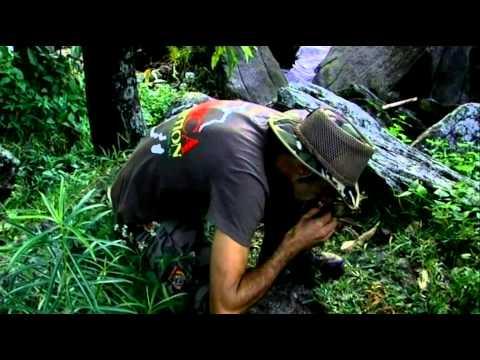 Strain Hunters Malawi Polish Subtitles