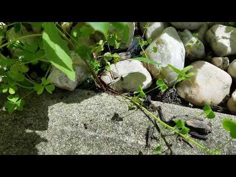 Garden Full of Ants in Manalapan, NJ
