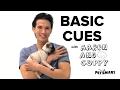 Basic Cues