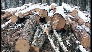 Вырубка деревьев в Чебаркуле