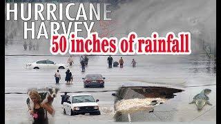 hurricane harvey highlights