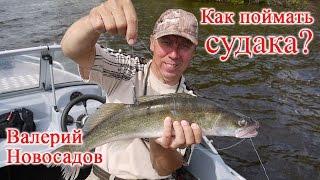 Смотреть онлайн Лекция Валерия Новосадова: ловля судака