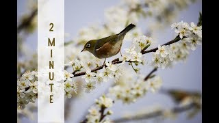 Download Video Reiki 2 Minute Timer with Armenian Flute