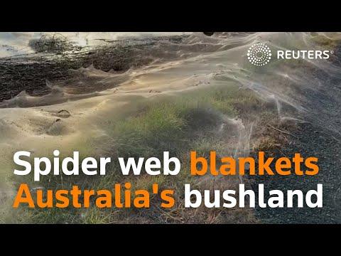 Huge spider web blankets bushland in Australia