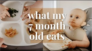 WHAT MY 7 MONTH OLD EATS IN A DAY...OR 3 | BABY LED WEANING VS PUREES