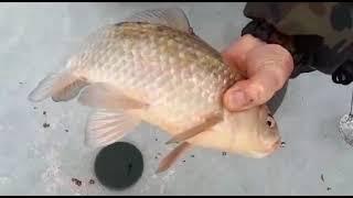 Зимняя рыбалка на пролетарском водохранилище