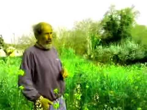 Σεμινάριο για φυσική καλλιέργεια σε λαχανόκηπο