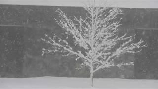 Scenes in the snow