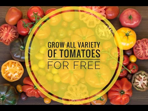 , title : 'Grow Lots of Tomatoes in Balcony: Full updates Complete Growing Guide for beginners'
