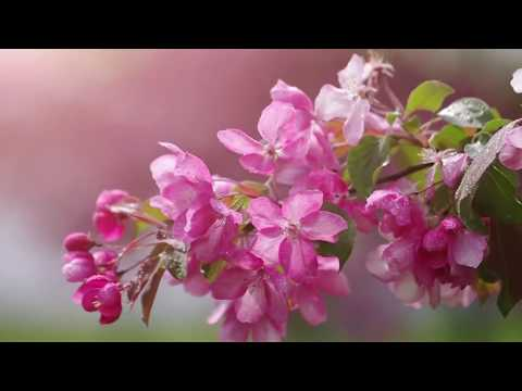 Relaxing Music for Stress Relief. Soothing Music for Meditation, Healing Therapy, Study, Sleep, Yoga