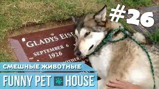 СМЕШНЫЕ ЖИВОТНЫЕ И ПИТОМЦЫ #26 ЯНВАРЬ 2019 [Funny Pet House] Смешные животные