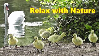 Relax Your Dog TV : Relaxing TV for Dogs at The Beautiful Spring Lake ~ Relax with Nature