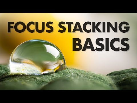 Focus Stacking Basics in Macro Photography