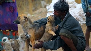 Slum-dweller in India shares food with street dogs