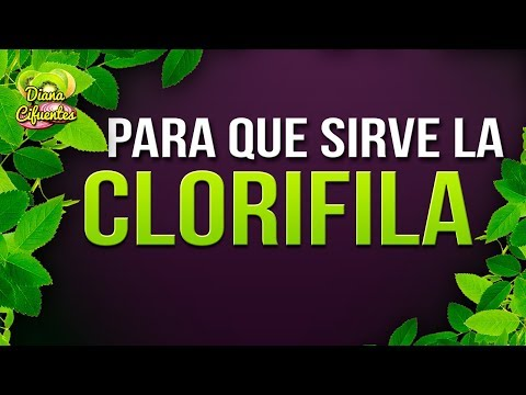 Para Que Sirve La Clorofila - Propiedades, Beneficios Y Contraindicaciones De La Clorofila