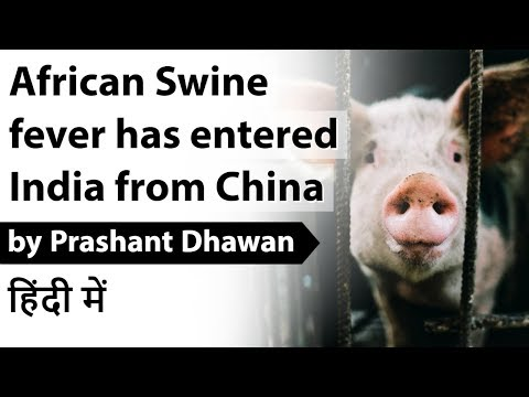 African Swine Fever has entered India from China Current Affairs 2020 #UPSC