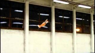 preview picture of video 'Teremrepítés Balmazújváros (január)'