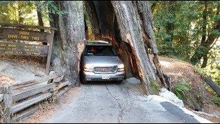 3000 year redwood tree ( SHRINE DRIVE THRU TREE )
