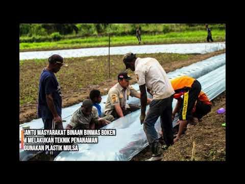 Binmas Noken Polri Bersama Kelompok Tani Kampung Musaima II Bercocok Tanam Bibit Melon
