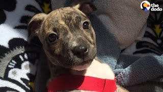 Download Youtube: Abandoned Puppy Beats All the Odds to Survive | The Dodo