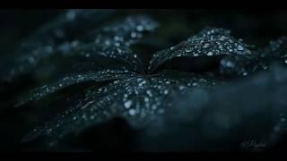 Billie Eilish -lovely  status #nature #status #whatsapp #hd #love #song