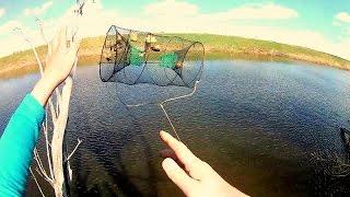 Принцип действия морды для ловли рыбы