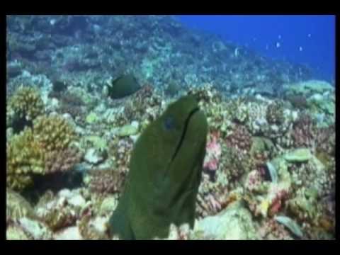 Moorea, Moorea verschiedene Tauchplätze,Französisch-Polynesien