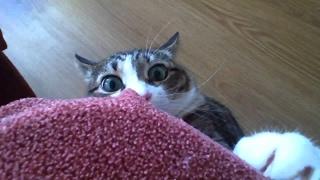 Смешные КОТЫ   Лучшие приколы Funny cats compilation  Подборка #23