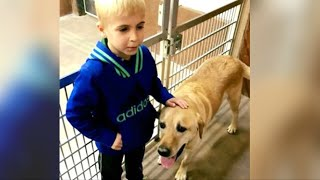 7-Year-Old Boy Creates An Underground Railroad That Saves 1000s Of Dogs From Heartbreaking Fate