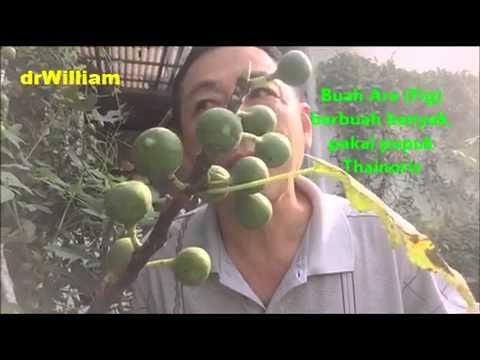 Kolak buah buatan sendiri untuk menurunkan berat badan