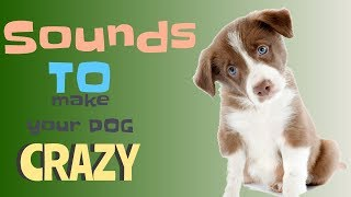 Sounds That Will Make Your Dog Tilt Their Head! I PROMISE!