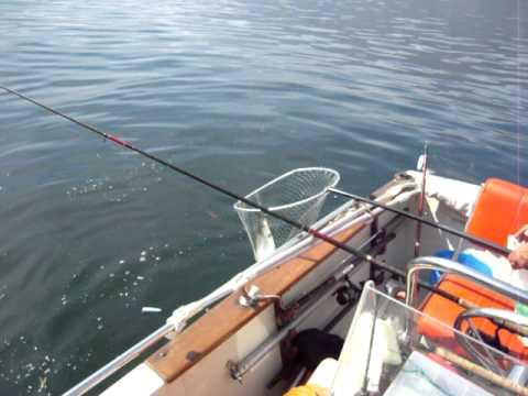 I navigatori per pescare in SPb nel prezzo