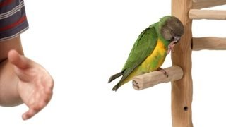 How to Stop Bird from Pooping on You   Parrot Training