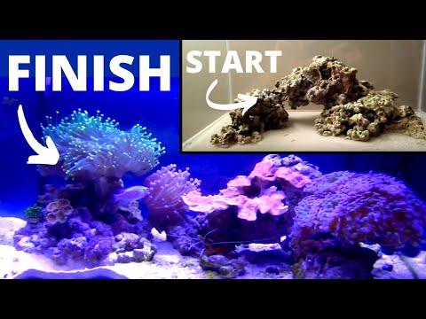 How to set up a Saltwater Aquarium