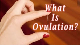 what Does Ovulation Mean -- What Is Ovulation?